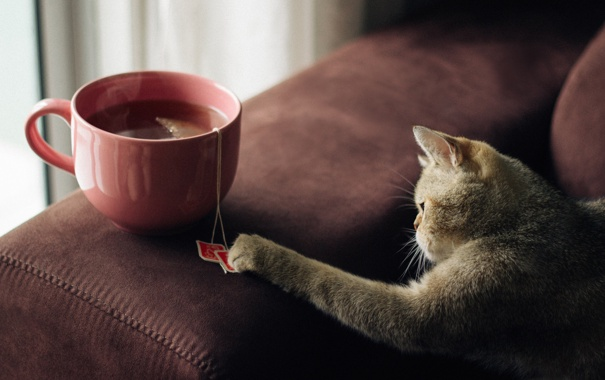 Чай в пакетиках вбиває