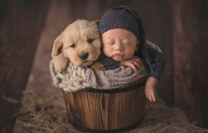 Науковці: Якщо у вашому домі є діти, вам потрібен собака