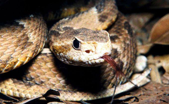 Зміїний укус: перша допомога дитині